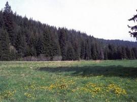 Grevena_917