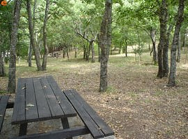 dadia-forest-greece-1