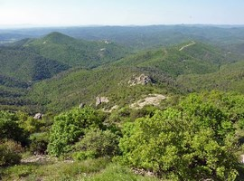 dadia-forest-greece-3