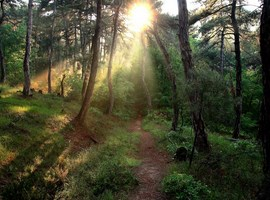 dadia-forest-greece-4