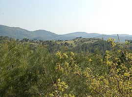 dadia-forest-greece-7